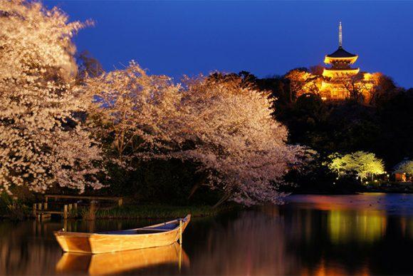 Yokohama Sankeien Garden (National scenic spot / Sakura, Cherry Blossom,Japanese Garden)