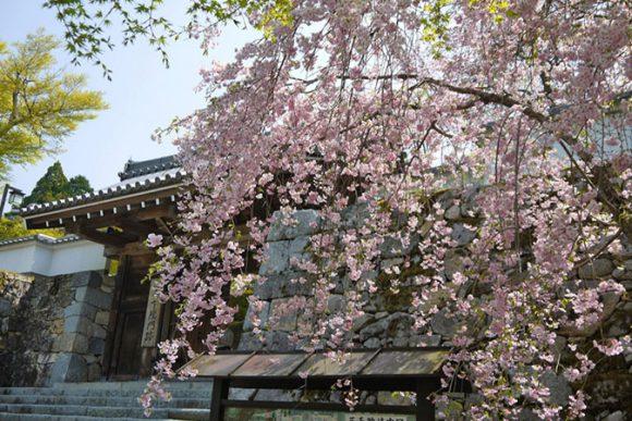 Sanzen In in Kyoto (Sakura famous place)