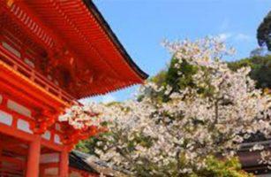 Kamigamo Shrine (famous place of Cherry blossom )
